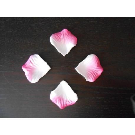 petale de rose blanche bout rose